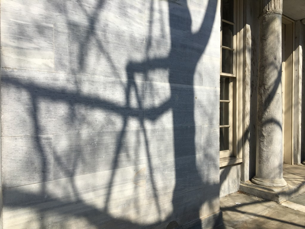 strong tree shadows